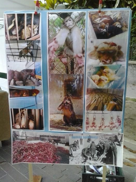 arco 01 06 2014 20140602 1002748884 - 01.06.2014 TAVOLO INFORMATIVO - ARCO TN ALLA FESTA VEG DEGLI ANIMALI