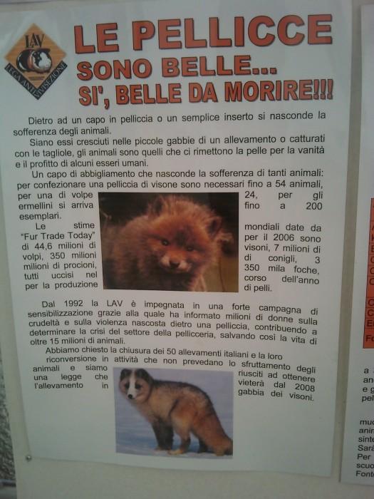 bio vegan fest 2011   bassano del gr 20130212 1235726404 - BIO VEGAN FEST 2011 - BASSANO DEL GRAPPA
