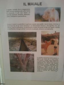 bio vegan fest 2011   bassano del gr 20130212 1240307066 960x300 - BIO VEGAN FEST 2011 - BASSANO DEL GRAPPA - 2011-