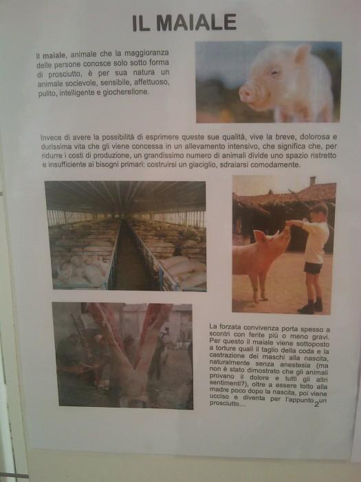 bio vegan fest 2011   bassano del gr 20130212 1240307066 - BIO VEGAN FEST 2011 - BASSANO DEL GRAPPA - 2011-
