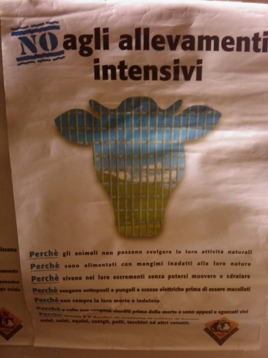 bio vegan fest 2011   bassano del gr 20130212 1254108481 - BIO VEGAN FEST 2011 - BASSANO DEL GRAPPA