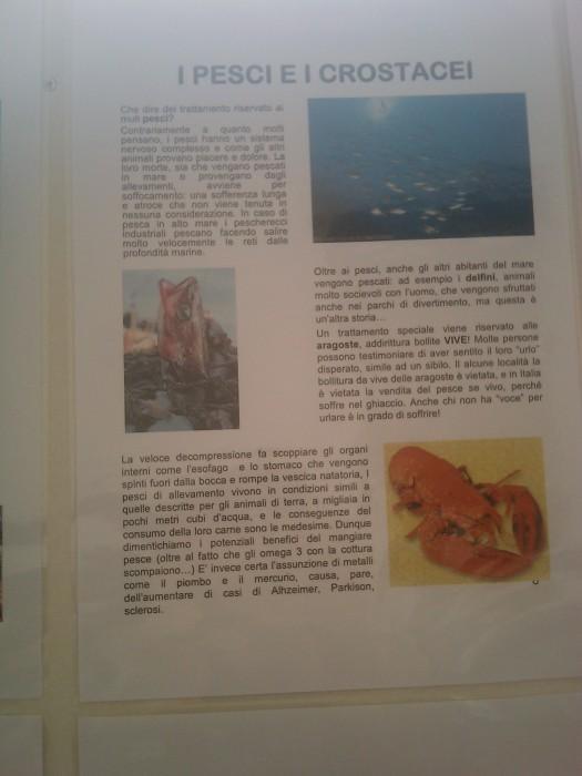 bio vegan fest 2011   bassano del gr 20130212 1267488016 - BIO VEGAN FEST 2011 - BASSANO DEL GRAPPA