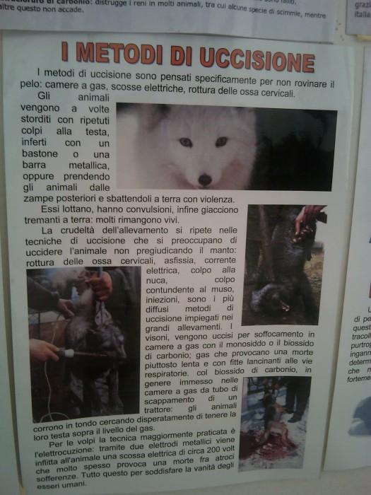 bio vegan fest 2011   bassano del gr 20130212 1988887835 - BIO VEGAN FEST 2011 - BASSANO DEL GRAPPA