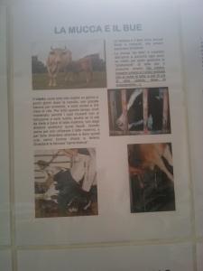 bio vegan fest 2011   bassano del gr 20130212 2017631502 960x300 - BIO VEGAN FEST 2011 - BASSANO DEL GRAPPA