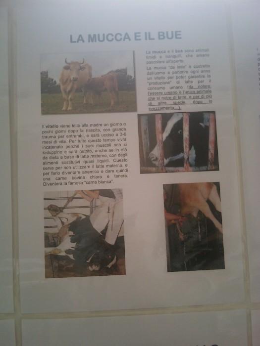 bio vegan fest 2011   bassano del gr 20130212 2017631502 - BIO VEGAN FEST 2011 - BASSANO DEL GRAPPA