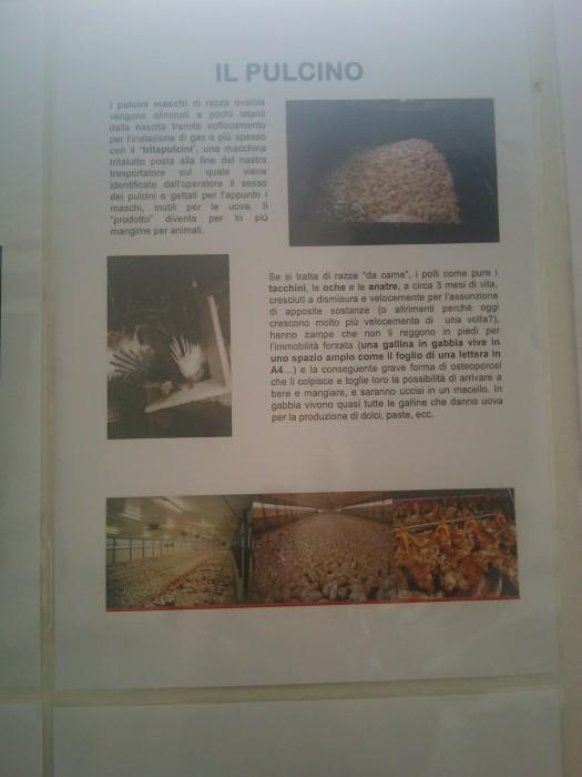 bio vegan fest 2011   bassano del gra 20130212 1225373435 - BIO VEGAN FEST 2011 - BASSANO DEL GRAPPA - 2011-