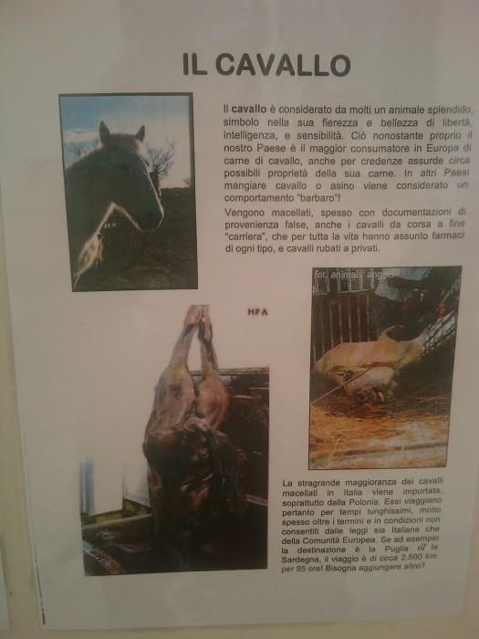 bio vegan fest 2011   bassano del grappa 20110605 1524069546 - BIO VEGAN FEST 2011 - BASSANO DEL GRAPPA - 2011-