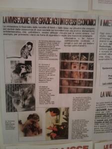 bio vegan fest 2011   bassano del grappa 20110605 1787400328 960x300 - BIO VEGAN FEST 2011 - BASSANO DEL GRAPPA - 2011-