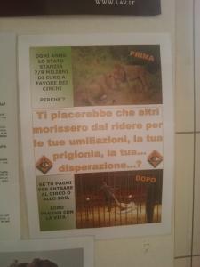 bio vegan fest 2011   bassano del grappa 20110605 1920271679 960x300 - BIO VEGAN FEST 2011 - BASSANO DEL GRAPPA