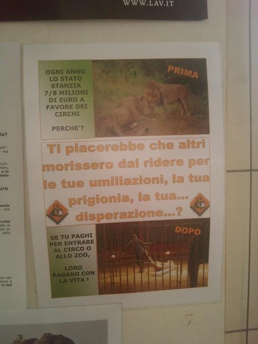 bio vegan fest 2011   bassano del grappa 20110605 1920271679 - BIO VEGAN FEST 2011 - BASSANO DEL GRAPPA - 2011-