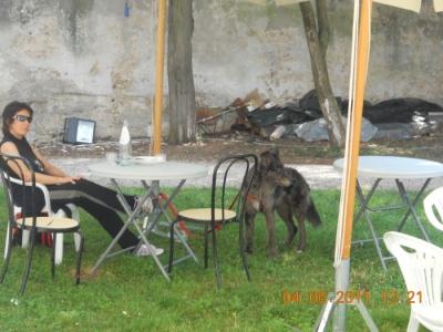 bio vegan fest bassano del gra 20130212 1856870963 960x300 - BIO VEGAN FEST 2011 - BASSANO DEL GRAPPA