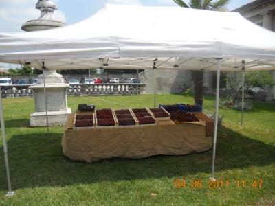bio vegan fest bassano del grappa 20110605 1498045019 960x300 - BIO VEGAN FEST 2011 - BASSANO DEL GRAPPA - 2011-