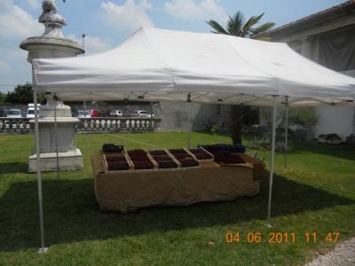 bio vegan fest bassano del grappa 20110605 1968786933 960x300 - BIO VEGAN FEST 2011 - BASSANO DEL GRAPPA - 2011-
