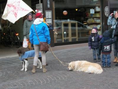 bolzano 0402 20130212 1744663147 960x300 - Bolzano 04.02.2012 manifestazione contro lo sfruttamento degli animali