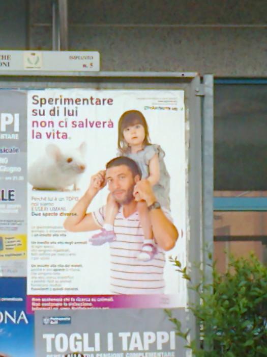 cena vegan e campagna contro la vivisezione 20120609 1796244096 - 25.05.2012 - CENA VEGAN E CAMPAGNA CONTRO LA VIVISEZIONE
