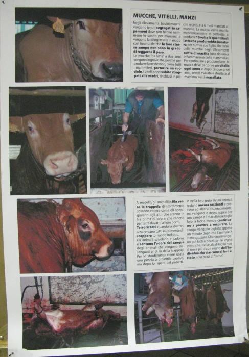 f la cosa giusta ottobre 2012 20121101 1398147761 - MOSTRA SUI MACELLI - FA LA COSA GIUSTA OTTOBRE 2012 - 2012-