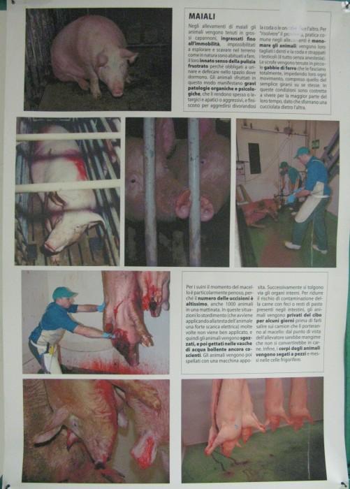 f la cosa giusta ottobre 2012 20121101 1601387973 - MOSTRA SUI MACELLI - FA LA COSA GIUSTA OTTOBRE 2012 - 2012-