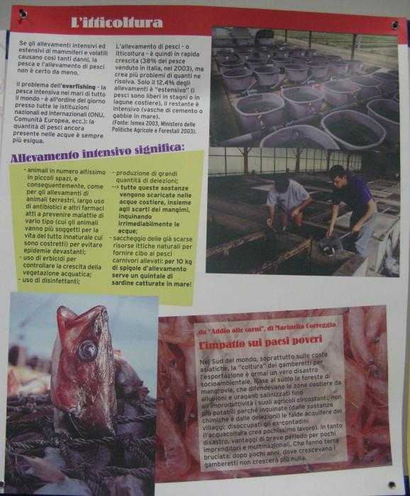 f la cosa giusta ottobre 2012 20121101 1981239439 - MOSTRA SUI MACELLI - FA LA COSA GIUSTA OTTOBRE 2012 - 2012-