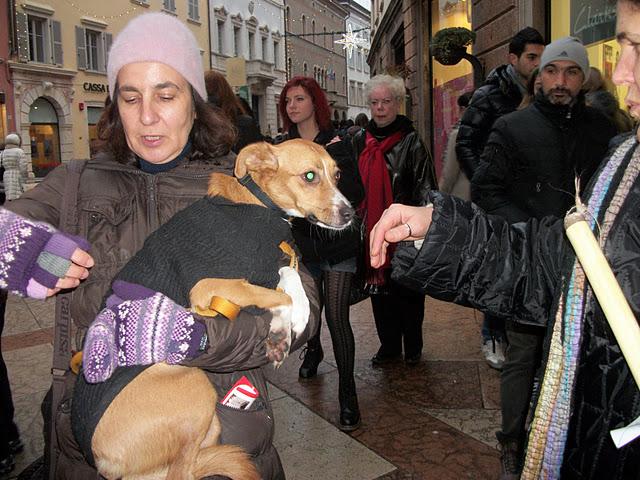 fiaccolata per gli animali 20111210 1573924640 - 03 dicembre 2011 Trento fiaccolata per denunciare lo sterminio degli animali nel periodo natalizio (e non solo!)