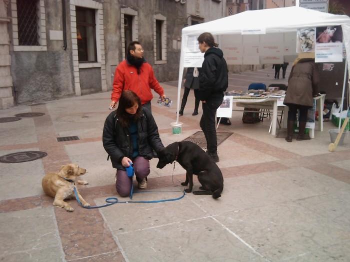img 1740 20110313 1234432226 - TRENTO - 12.03.2011 - TAVOLO INFORMATIVO SULLA VIVISEZIONE - 2011-