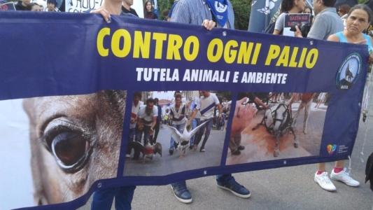 immagini e video 2015 470 1024x576 960x300 - Manifestazione contro il Palio di Siena - 16.08.2015