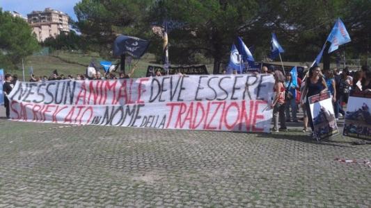 immagini e video 2015 484 1024x576 960x300 - Manifestazione contro il Palio di Siena - 16.08.2015