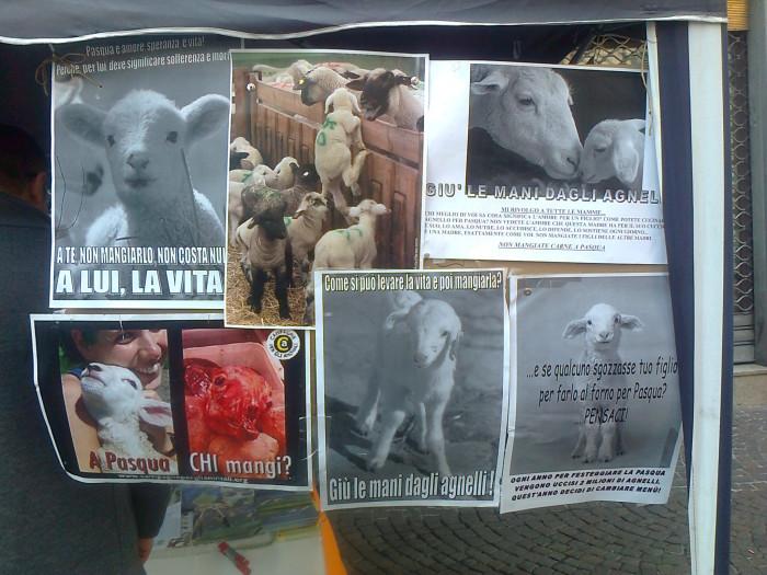 la strage pasquale 2012 20120325 1428412557 - TAVOLO INFORMATIVO SULLA STRAGE PASQUALE DI AGNELLI E CAPRETTI - 24.03.2012