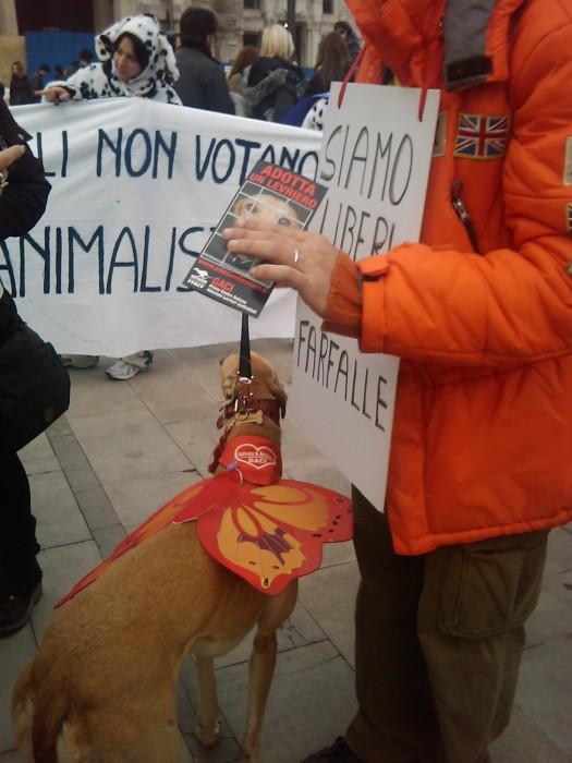 manifestazione contro la vivisezione   milano 5 marzo  20130212 1211642060 - MANIFESTAZIONE CONTRO LA VIVISEZIONE - MILANO 5 marzo 2011