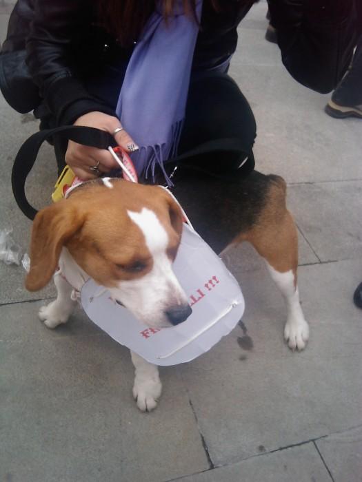 manifestazione contro la vivisezione   milano 5 marzo  20130212 1486863606 - MANIFESTAZIONE CONTRO LA VIVISEZIONE - MILANO 5 marzo 2011