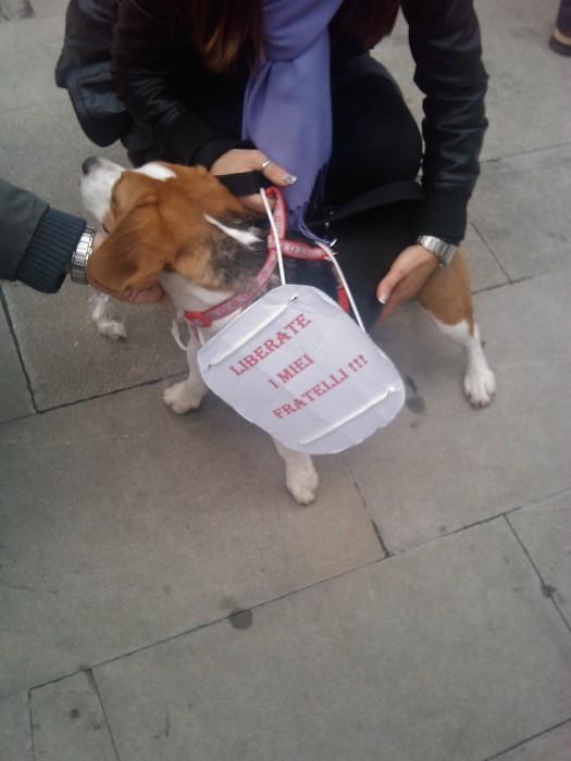 manifestazione contro la vivisezione   milano 5 marzo  20130212 1603803811 - MANIFESTAZIONE CONTRO LA VIVISEZIONE - MILANO 5 marzo 2011