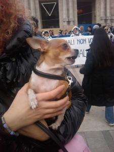 manifestazione contro la vivisezione   milano 5 marzo  20130212 1604704891 960x300 - MANIFESTAZIONE CONTRO LA VIVISEZIONE - MILANO 5 marzo 2011