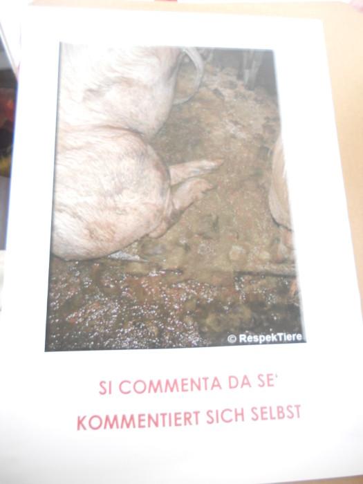 manifestazione contro lo sfruttamento degli anim 20130212 1262392248 - Bolzano 04.02.2012 manifestazione contro lo sfruttamento degli animali - 2012-