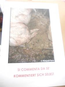 manifestazione contro lo sfruttamento degli animali 20120205 1222851619 960x300 - Bolzano 04.02.2012 manifestazione contro lo sfruttamento degli animali