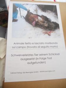 manifestazione contro lo sfruttamento degli animali 20120205 1795675900 960x300 - Bolzano 04.02.2012 manifestazione contro lo sfruttamento degli animali
