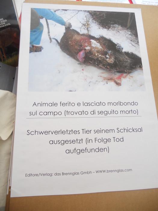 manifestazione contro lo sfruttamento degli animali 20120205 1795675900 - Bolzano 04.02.2012 manifestazione contro lo sfruttamento degli animali - 2012-