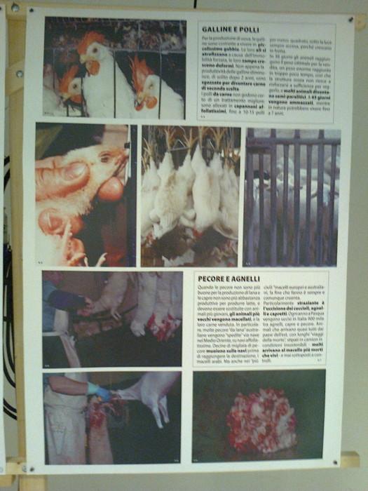 mostra animalista sui macelli 20111101 1061194817 - FA' LA COSA GIUSTA 2011 - MOSTRA ANIMALISTA