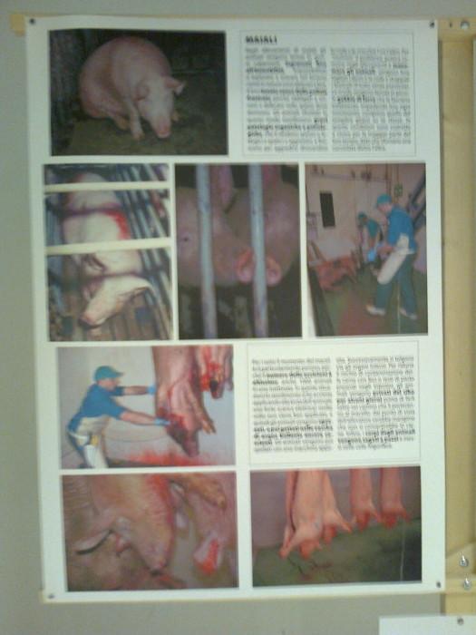 mostra animalista sui macelli 20111101 1087015630 - FA' LA COSA GIUSTA 2011 - MOSTRA ANIMALISTA