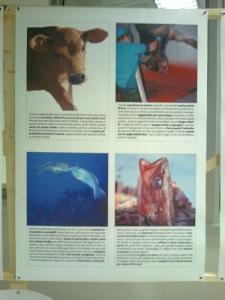 mostra animalista sui macelli 20111101 1433879587 960x300 - FA' LA COSA GIUSTA 2011 - MOSTRA ANIMALISTA