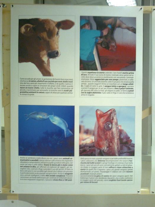 mostra animalista sui macelli 20111101 1433879587 - FA' LA COSA GIUSTA 2011 - MOSTRA ANIMALISTA