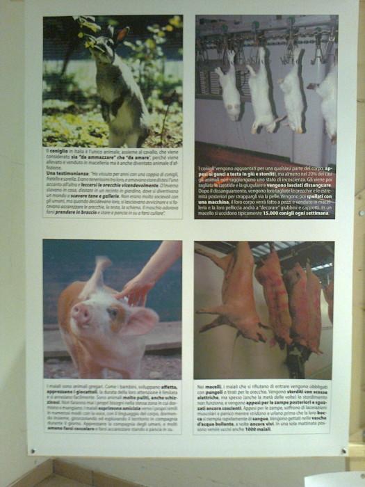 mostra animalista sui macelli 20111101 1505205135 - FA' LA COSA GIUSTA 2011 - MOSTRA ANIMALISTA