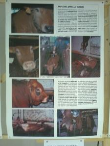mostra animalista sui macelli 20111101 1595651325 960x300 - FA' LA COSA GIUSTA 2011 - MOSTRA ANIMALISTA