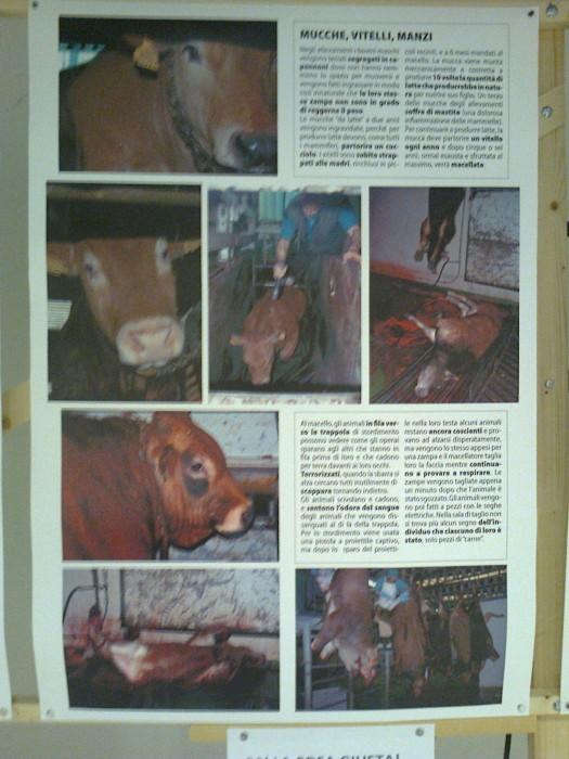 mostra animalista sui macelli 20111101 1595651325 - FA' LA COSA GIUSTA 2011 - MOSTRA ANIMALISTA