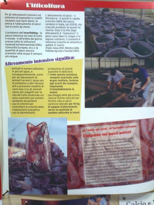 mostra animalista sui macelli 20111101 1637623665 - FA' LA COSA GIUSTA 2011 - MOSTRA ANIMALISTA