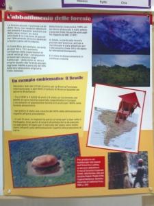 mostra animalista sui macelli 20111101 1769063499 960x300 - FA' LA COSA GIUSTA 2011 - MOSTRA ANIMALISTA