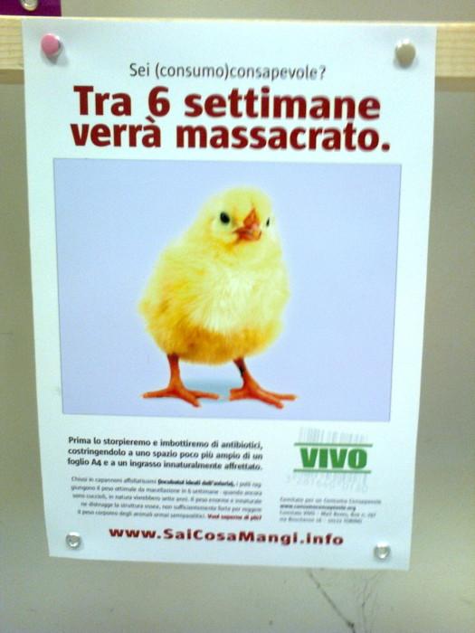 mostra animalista sui macelli 20111101 1863227668 - FA' LA COSA GIUSTA 2011 - MOSTRA ANIMALISTA