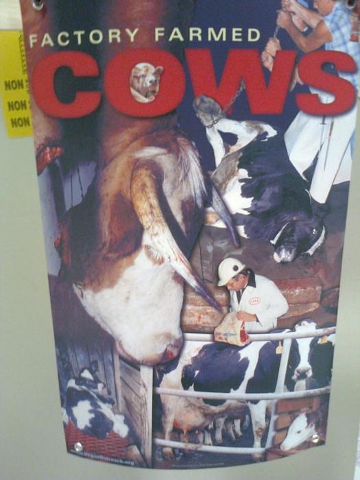 mostra animalista sui macelli 20111101 1912427995 - FA' LA COSA GIUSTA 2011 - MOSTRA ANIMALISTA