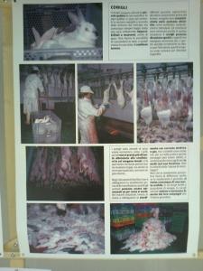 mostra animalista sui macelli 20111101 1917118415 960x300 - FA' LA COSA GIUSTA 2011 - MOSTRA ANIMALISTA
