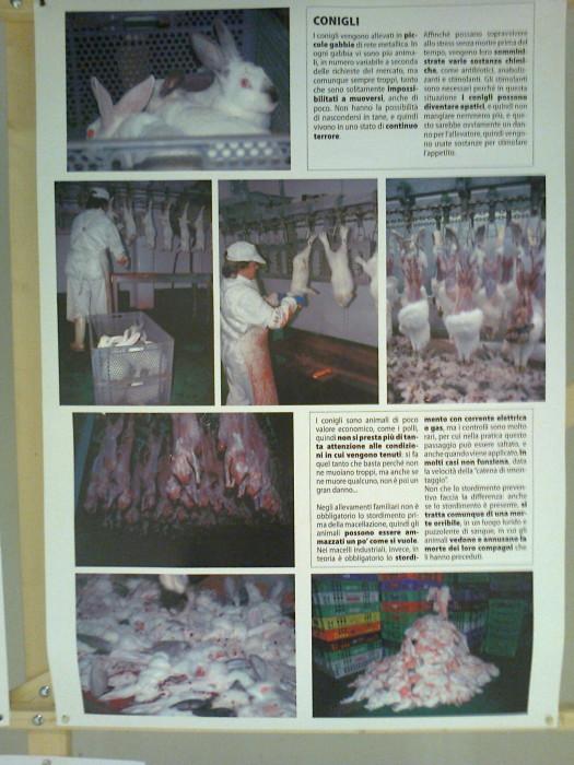 mostra animalista sui macelli 20111101 1917118415 - FA' LA COSA GIUSTA 2011 - MOSTRA ANIMALISTA