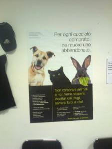 mostra animalista sui macelli 20111101 1964691091 960x300 - FA' LA COSA GIUSTA 2011 - MOSTRA ANIMALISTA