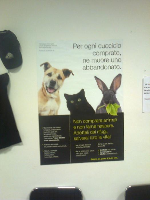 mostra animalista sui macelli 20111101 1964691091 - FA' LA COSA GIUSTA 2011 - MOSTRA ANIMALISTA